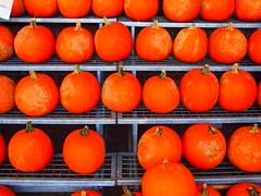 Pumpkins at Wegmans (Don C. over 2 Million Views) Tags: color fall market pennsylvania pumpkins excellent