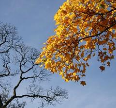 The Colours of Autumn (Elrenia_Greenleaf) Tags: park autumn tre