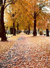 Cemetery (Nin) Tags: autumn fall leaves leaf october autumnleaves blad hst lv hstlv