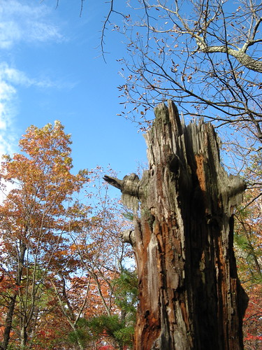 Stump and sky