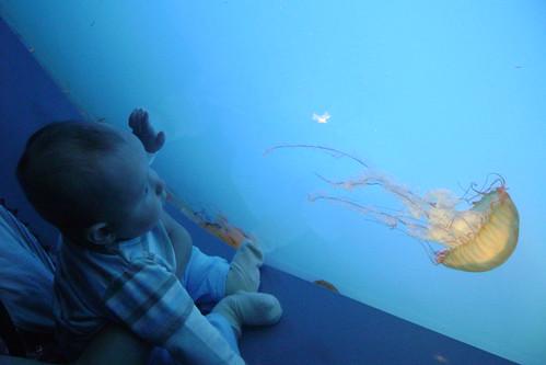 aquarium 013