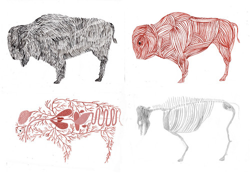 stripped buffalo