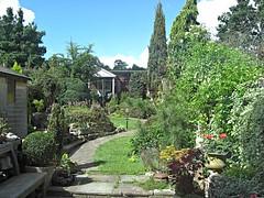 Back garden, summer 2007