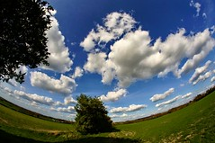 fisheye view (algo) Tags: uk blue trees england sky white green clouds interestingness topf50 europe explore hedge fields algo fisheyelens samyang 50f explore111 explore116