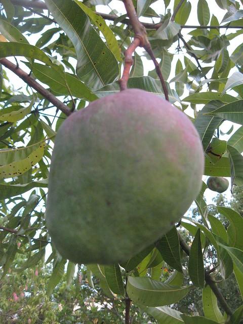 MangoUnkfruit