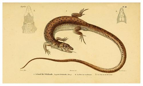 012-Erpétologie générale ou Histoire naturelle complète des reptiles 1834