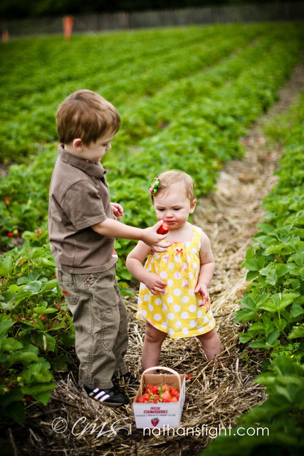 strawberry picking 2011 -_-12
