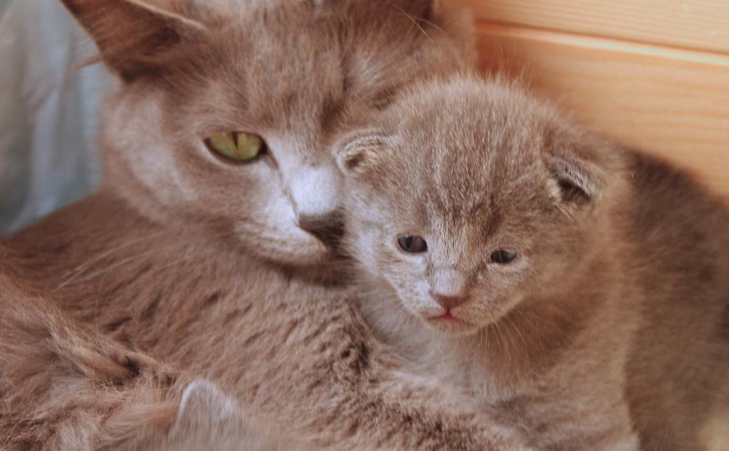 Kittens of Pegusha 3187835288_e3f82807e6_b