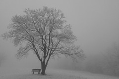 Fog (Mp3PintyoPhoto) Tags: winter tree canon eos usm 1740mm canonef1740mmf4lusm canon5dmarkii mp3pintyo