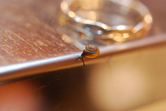 20090117_1822 (zacwight) Tags: ring smallsnail