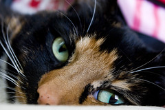 My cuddly girl (M1st1que) Tags: cute girl cat sweet kitty company kitteh pooh beertje