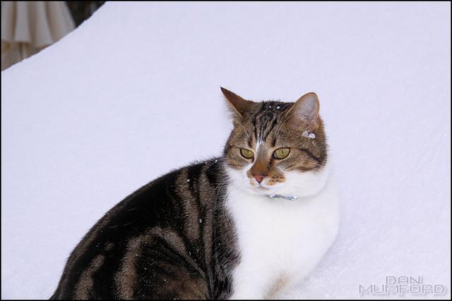 Snow 25