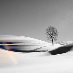 snowbow (jenny downing) Tags: winter light shadow blackandwhite white snow france mountains tree silhouette rainbow shadows bright snowy curves explore jura curved sparkly hilly baretree lonetree pristine shadowy wintery wintry deepsnow infrance juramountains newsnow thewhitestuff explored untrodden jennypics hautjura deepandcrispandeven takeninfrance treeinthesnow jennydowning seenonexplorefrontpage photobyjennydowning