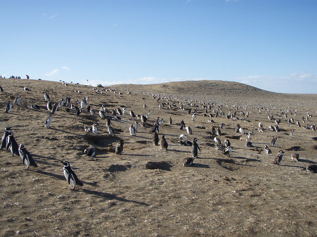 Los Pingüinos Natural Monument