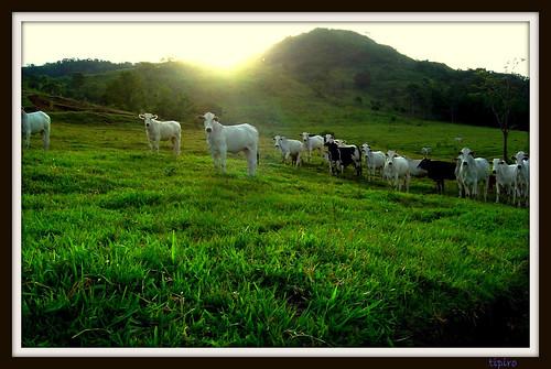 Sunset On The Farm by tipiro.
