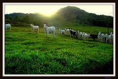 Sunset On The Farm (tipiro) Tags: verde green na