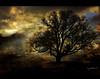 "~ again and again, my magic tree for you ;-) (together8) Tags: tree texture nature austria spirit golddragon nikond40 ""isawyoufirst"" theunforgettablepictures multimegashot multimegastar oraclex lesamisdupetitprince goldenart together8 thedantecircle artistictreasurechest themonalisasmile luckyorgood highenergyplaces myspecialtree"