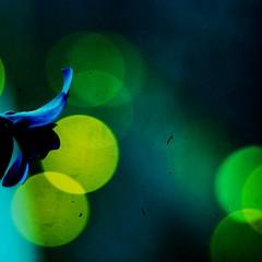 forgive me if im young (*iskandar) Tags: flower joaquim texture canon eos lights singapore bokeh vanda miss malay iskandar orchird eos450d 450d rebelxsi youscore