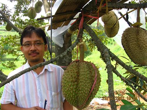 Durian Mon Thong