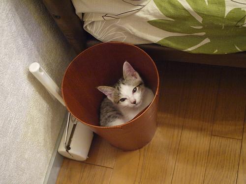 ゴミ箱にすっぽり