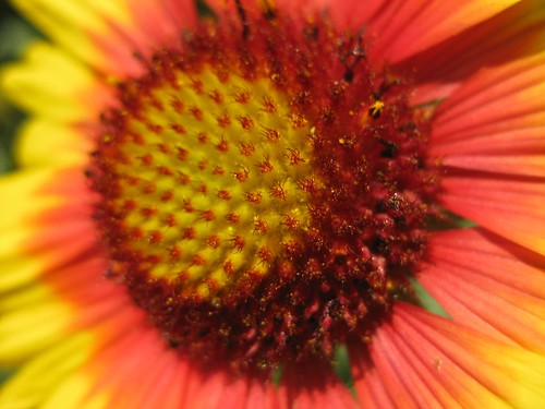 Mom's flowers 047