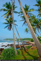 156 (Dhammika Heenpella / Images of Sri Lanka) Tags: travel sea vacation holiday travelling tourism beach nature landscape coast interesting scenery asia outdoor south southern coastal scenary vista environment srilanka southeast lk scape downsouth coconuttrees holidaying tangalle scenicbeauty placesofinterest photosof tangalla southernprovince dhammikaheenpella paraiwella paraviwella theimagesofsrilanka heenpalla visitsrilanka2011