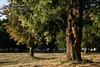 (Gabó) Tags: park sunset tree nature hungary lovasberény globalvillage2