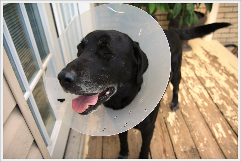 cone of shame 4