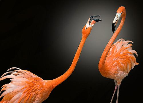 3810442369 cfafe50166 Beautiful Birds   The Splash of Colors!!!