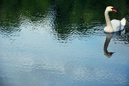 Swan:  July 13, 2009