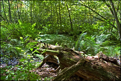 Cowles Bog