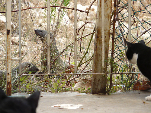 Family of mongooses and cats