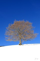 Alone in the white ! (Jean-christophe 94) Tags: blue sky white snow tree nature landscape alone bleu ciel neige paysage arbre blanc lonelytree solitaire astoundingimage jc94 jeanchristophe94