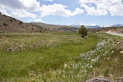 20090525_Bodie_250 (Carols Images) Tags: california easternsierras highway395 bodiestatehistoricpark