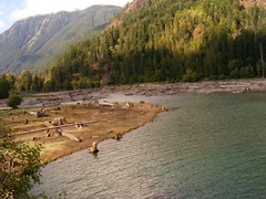 DSCF9423.JPG (joey_______________________________bates) Tags: trees green nature water washington stumps lakecushman