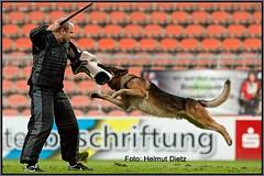 GERMAN SHEPHERD - DEN04 - CHADE'S TIMO, DENMARK