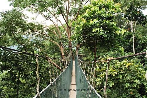 canopy walk 2