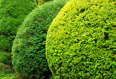 Topiary in the Round at Great Comp Garden! (antonychammond) Tags: new uk england green leaves garden photo kent topiary britain round flickraward firsttheearth estremit simplysuperb greatcompgarden arkiesnaturegroup newphotodistillery