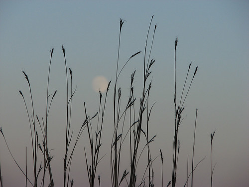 Grass and Moon