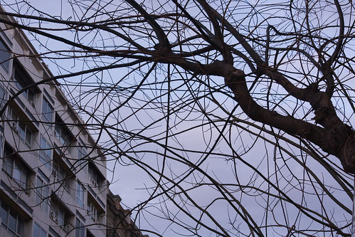 [26/365] Empty trees