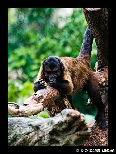 Squirrel monkey?
