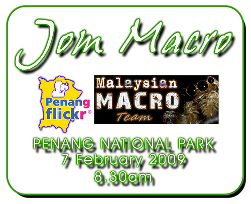 Jom Macro @ Penang National Park