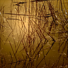 oro liquido (rita vita finzi) Tags: light nature water gold quiet silence amazement marvel stillness liquidgold fineartphotos artlibre todat infinestyle goldenart sensationalphoto