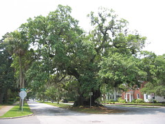 Lover's Oak (Frank Kehren) Tags: canon georgia oak brunswick spanishmoss albany bmwz4 canonpowershots45 loversoak