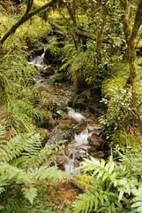 Little stream (Paradise, Chatham Islands, New Zealand) Photo