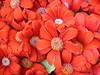 carlini rossi