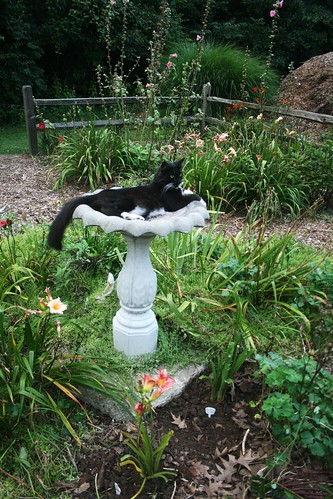 Zak in the fenced garden birdbath