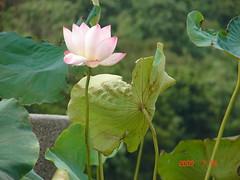 Lotus Lake3
