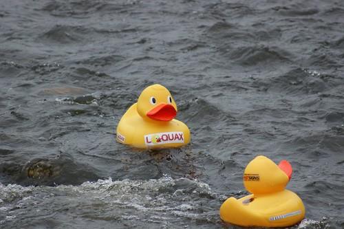 Llanelli Duck Race - Loquax 1