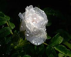 _DSC3994 (pnther60) Tags: backyard roanoke floraandfauna